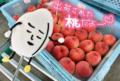 出荷された桃と飯太郎